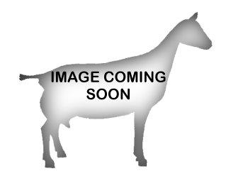 Alpine Dairy Goats